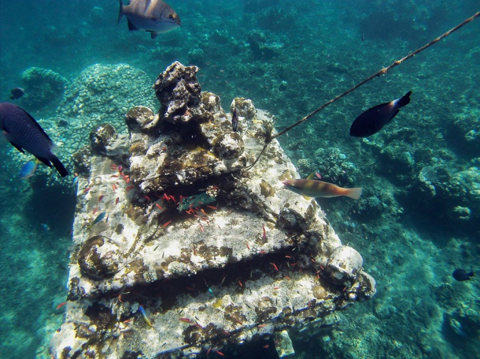 There are a number of great underwater structures that have been put in as artificial reef structures to encourage the marine life.  Just look for the floating buoys and follow the lines down.