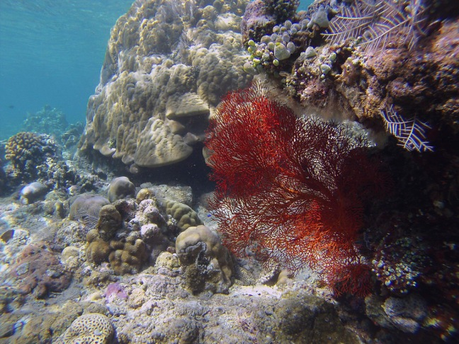 Some more shots of the spectacular coral formations.  Don't be afraid to dive down a little bit to get a bit closer.