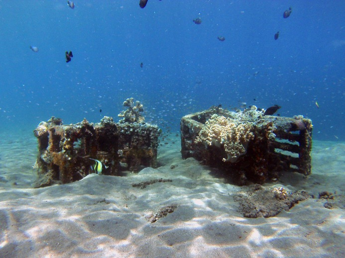As you explore the Jemeluk Bay area you will find a wide range of artificial reef objects, they have sunk a wide range of objects to promote coral growth and fish life.