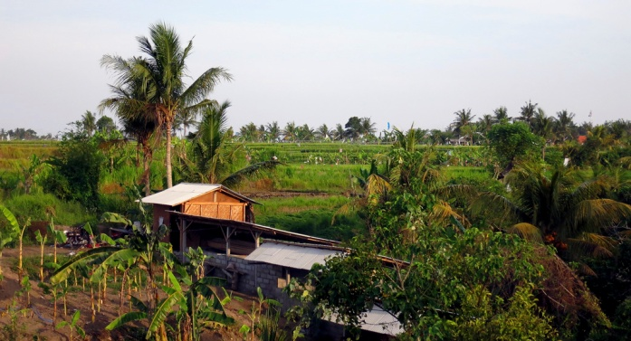 Great view from the rooftop - hard to believe this is technically still Denpasar with great rice fields and farms only across the river